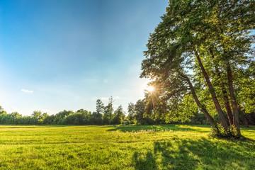 Beautiful summer landscape with grass oak and sun