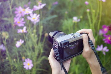 Woman having fun in the cosmos flower field with camera travel photo of photographer, Tourist take a photo to cosmos flower garden