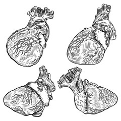 Set of sketched hand drawn line art decorative human hearts in anatomy details. Vintage style beautiful flesh tattoo templates isolated on white. T-shirt print design. Vector.