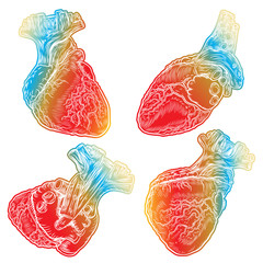 Set of red human hearts with aorta, veins and arteries isolated on white background. For cardiology or medical design. Hand drawn flesh tattoo concept. Vector.