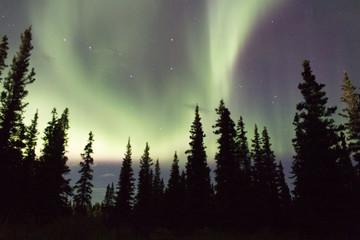 Northern lights across the black spruces on the Alaskan Range