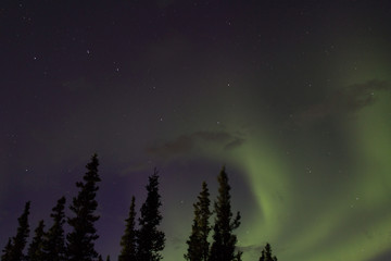 Northern lights across the black spruces on the Alaskan Range