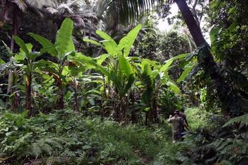 Hiking along a rainforest path
