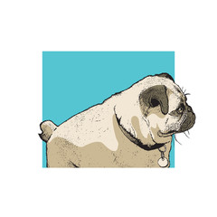 Dog of pug breed. Portrait of a cute pet. Color drawing, vector illustration in engraving style.