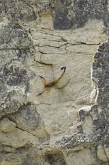 Desert scorpion. Tatacoa desert