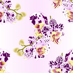 Seamless texture stem with flowers and  buds beautiful  Orchid Phalaenopsis spotted  purple and white   closeup  vintage  vector editable illustration hand draw