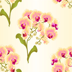 Seamless texture branches orchid Phalaenopsis yellow flowers tropical plants green stem and buds and leaves  vintage vector botanical illustration for design editable hand draw