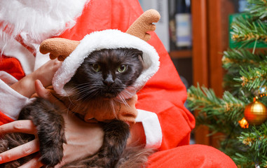 Image of black cat in deer suit at Santa's arms