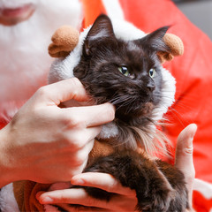 Picture of New Year's black cat in deer costume