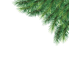 fir-tree branches- festive design. Close-up. Isolated without a shadow. Christmas. New Year.