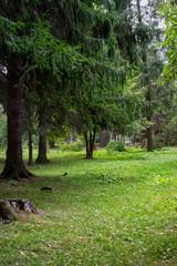 Squirrel in the park in Vatra Dornei, Suceava, Romania