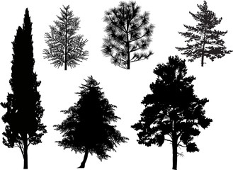 six coniferous tree silhouettes isolated on white
