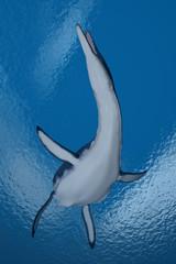 Prähistorisches Meeresreptil Dolichorhynchops