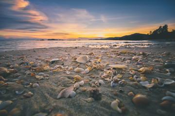 seashell on the sand during sunset at Sungai Batu beach, Penang, Malaysia (selective focus)