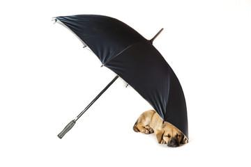 little dog resting under an umbrella