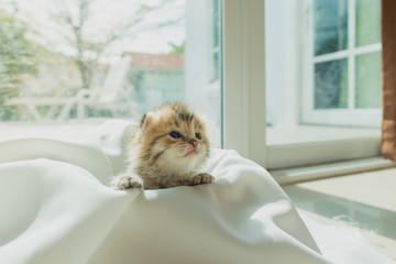 Cute lazy kitten
