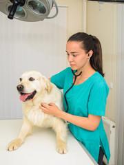 Healthy dog under medical exam
