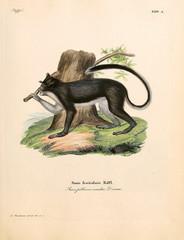 Illustration of primates.