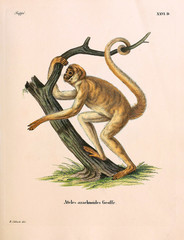 Illustration of primates.