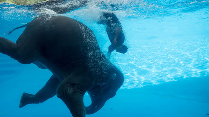 PATTAYA, THAILAND - October 14, 2017 : Elephant show swimming in the pool with a glass window in front of the children. Illustrative Editorial
