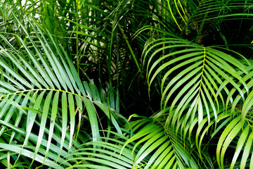 Tropical green palm leaves background