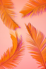 Tropical summer background - colorful exotic leaves