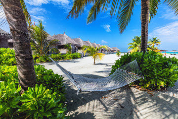 Empty hammock hanging between two palm trees. Maldives