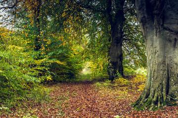 Waldlichtung im Herbst