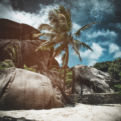 Palm tree and rocks on a tropical beach