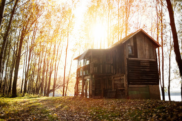 Cabin in the woods - sunset in the forest