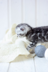 Young grey cat plays with the balls of yarn.