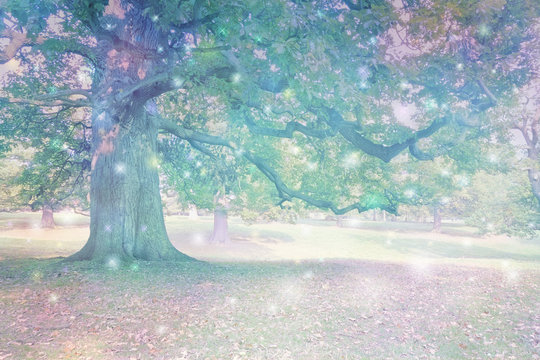 Spirit Orbs attracted to Ancient Oak Tree  - Big old oak tree with ethereal lighting and many different coloured orb lights depicting spiritual entities with copy space