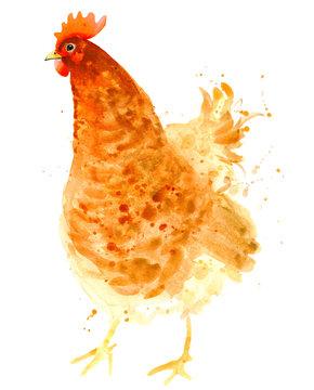 watercolor chicken illustration