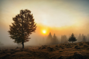 foggy morning. autumn dawn in the Carpathian Mountains