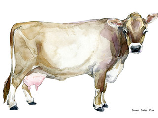 hand-drawn watercolor illustration of Dairy cow