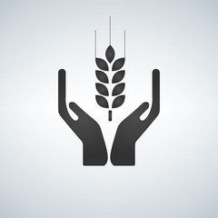 Hands holding a wheat plant icon