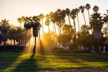 Silhouettes of palm trees at sunset, Santa Barbara beach, Southern California, USA