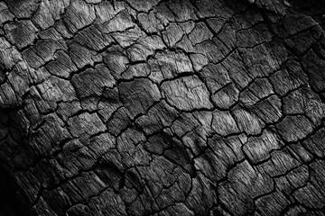 Poster de jardin Texture de bois de chauffage Burnt wood texture