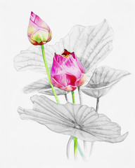 Painting  pink bouqet, happy postcard colorful flower of louts