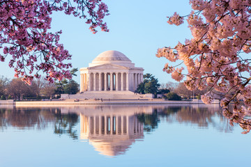 Beautiful early morning Jefferson Memorial with cherry blossoms