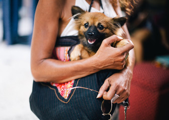 Woman carry cute puppy in the bag