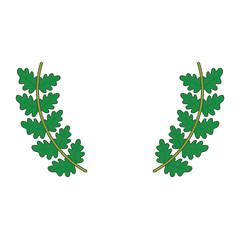 leaves  vector illustration