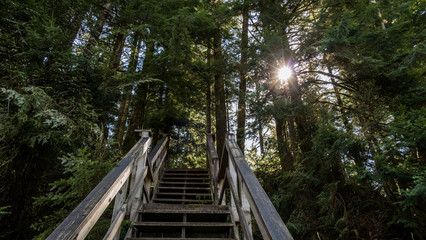 an ascend stairs in the forest with sun on the right