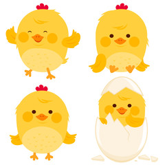 Little chicken collection. Vector illustration