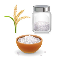 Rice ear, bowl, jar with long-grained and short-grained rice grain. Realistic set.