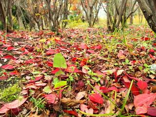 公園の落葉