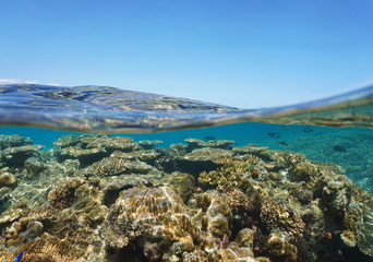 Above and below sea surface, stony coral reef underwater and blue sky split by waterline, New Caledonia, south Pacific ocean, Oceania