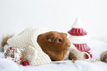 Новогодняя открытка с морской свинкой