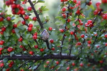 Fototapeta Barwy jesieni obraz