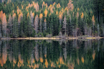 Lovely green and yellow forest foliage mirrored in the pristine waters of Ingeringsee